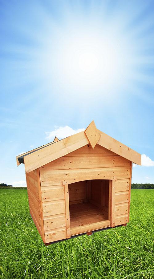 apex dog kennel - Apex Dog Kennel